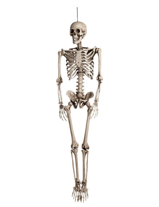 d coration suspendre squelette halloween achat de. Black Bedroom Furniture Sets. Home Design Ideas