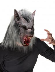 Masque loup garou adulte