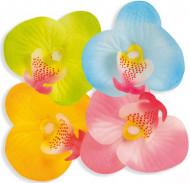Pétales fleur Hawaï
