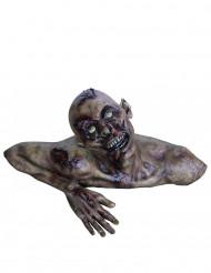 Buste zombie  taille réelle Halloween en décor