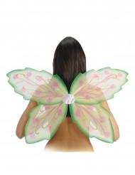 Ailes vertes papillon adulte