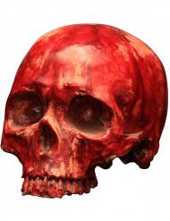 Crâne ensanglanté