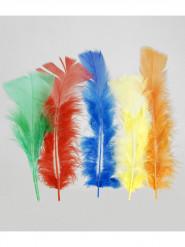100 plumettes multicolores