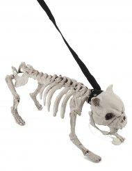 Chien squelette en laisse lumineux et sonore