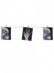 Guirlande avec radiographies 160x16 cm