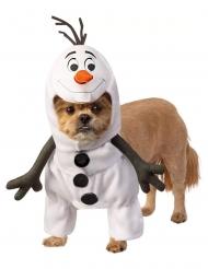 Déguisement Olaf La reine des neiges™ chien