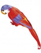 Vous aimerez aussi : Perroquet des �les Hawa�