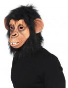 Também vai gostar : M�scara de macaco adulto