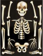 También te gustará : Pegatinas para ventanas esqueleto Halloween