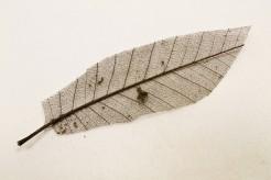 12 feuilles naturelles marron