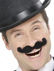 Moustaches noire à l