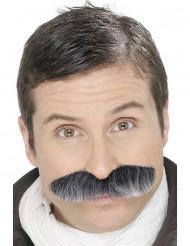 Moustache grisonnante adulte