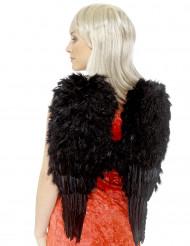 Ailes noires à plumes adulte