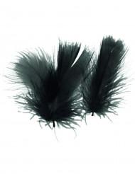 Plumettes noires