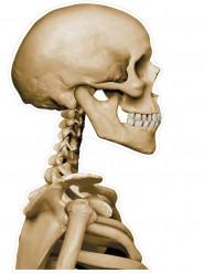 Décoration autocollante pour voiture squelette Halloween