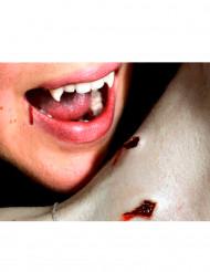 Blessures double morsure vampire transfert à l
