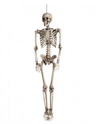 Décoration à suspendre squelette Halloween 160 cm