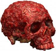 Crâne galeux ensanglanté