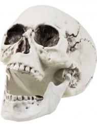 Décoration squelette 24 x 18 cm Halloween