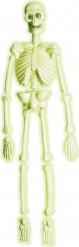 Squelette laboratoire phosphorescent 92 cm Halloween