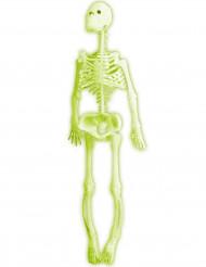 Squelette phosphorescent 35 cm Halloween