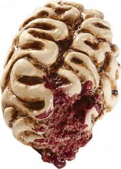 Cerveau 16 cm halloween