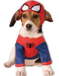 Déguisement pour chien Spider-Man™