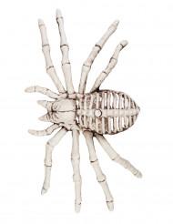 Décoration squelette d