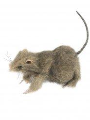 Décoration rat gris poilu 10 x 8 cm