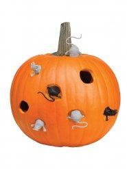 Kit sculpture de Citrouille souris Halloween 8 pièces