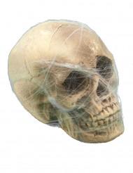 Décoration crâne avec toile d