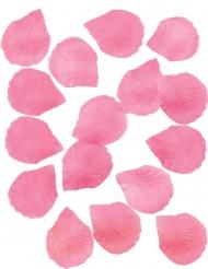 288 Pétales de roses fuschia