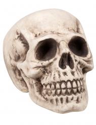 Tête de mort 23 x 22 x 31 cm