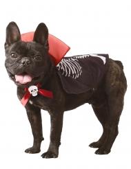 Déguisement vampire pour chien