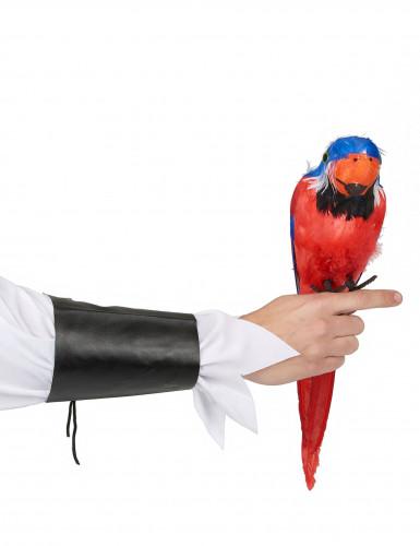 Perroquet des îles Hawaï 40 cm