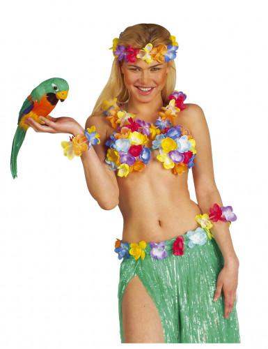 Perroquet des îles Hawaï-1
