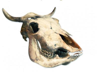 Décoration murale crâne désert Western
