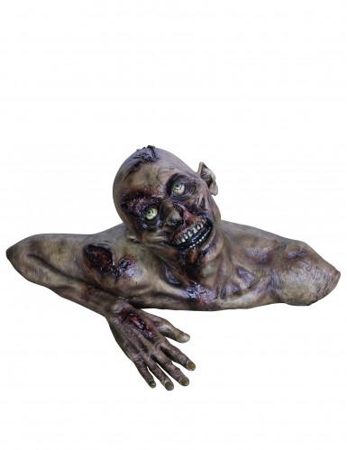 Buste zombietaille réelle Halloween en décor