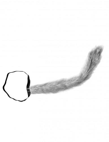 Queue de loup adulte-1