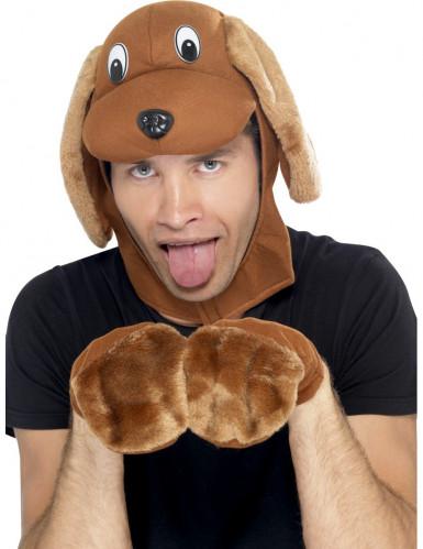 Kit chien adulte