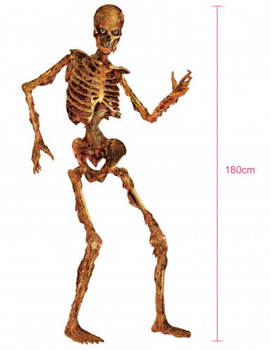 Décoration squelette articulé en décomposition 180 cm-1