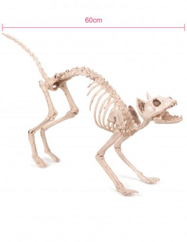 Décoration chat squelette Halloween-1