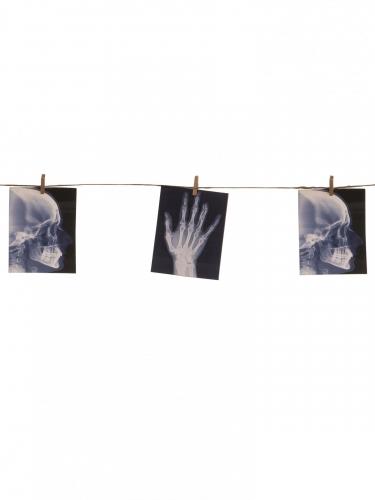 Guirlande avec radiographies 1.60 m