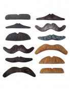 Lot 12 moustaches