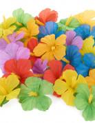 24 fleurs hawaïennes