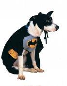 Déguisement Batman™ chien
