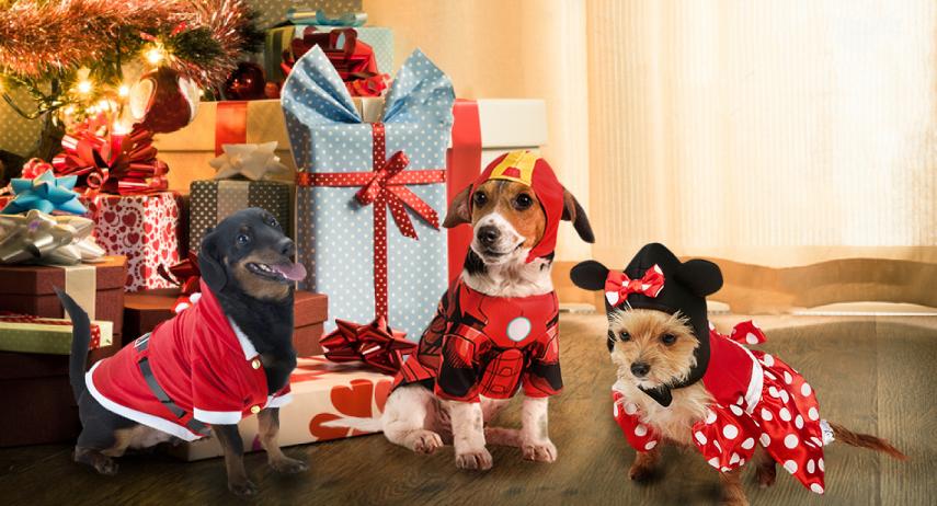Les idées de déguisements de Noël pour chien